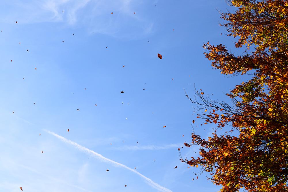 falling-leaves